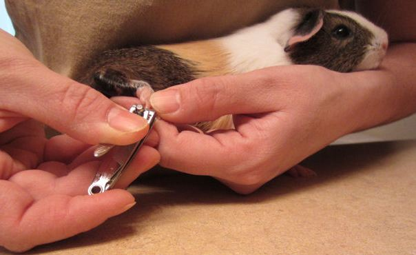 Nail clipping techniques.