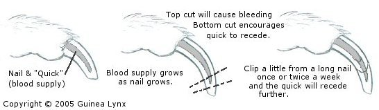 Illustration of nails and quick.